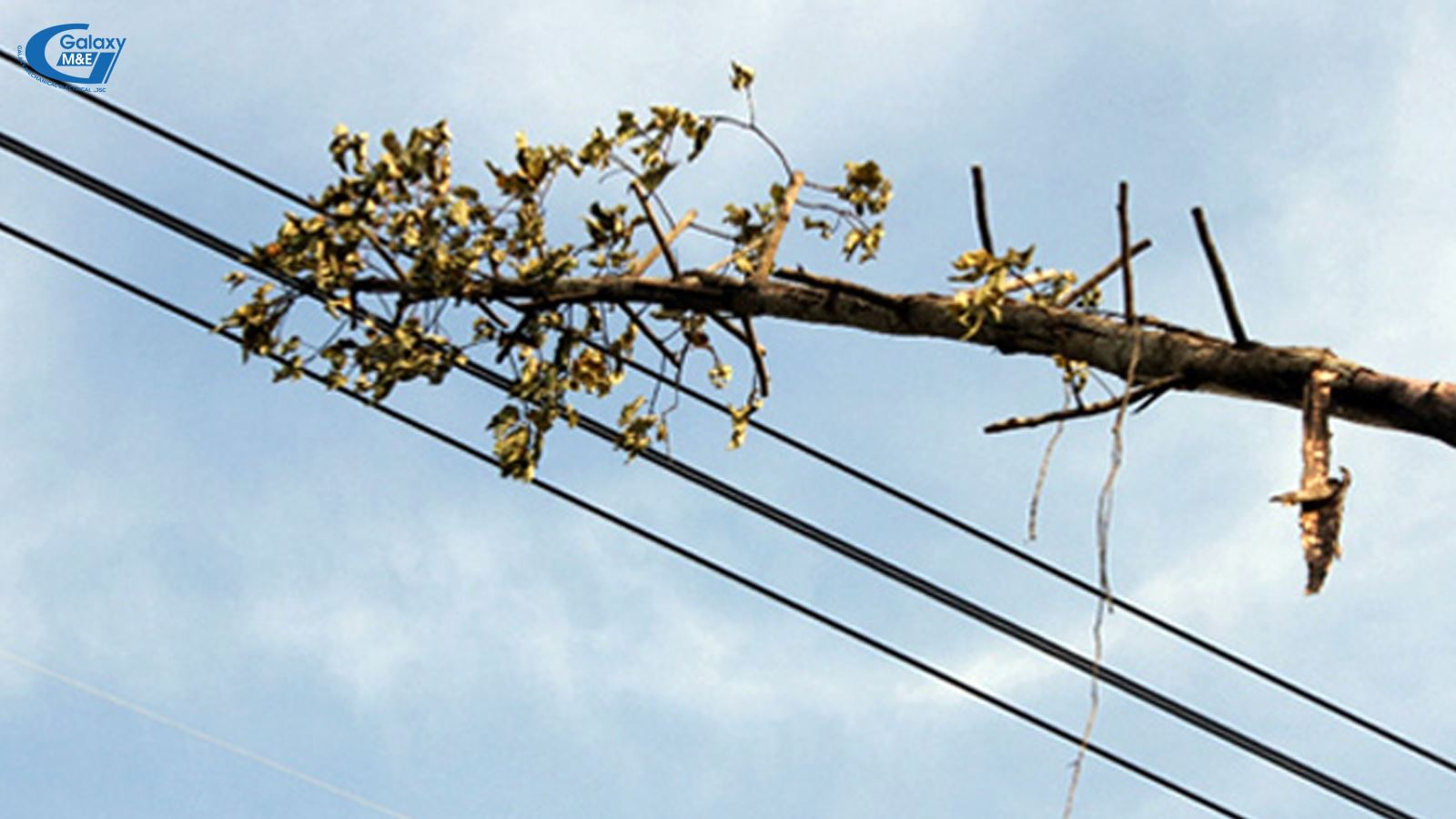 Absolutely do not plant trees within the protection of high tension power lines.